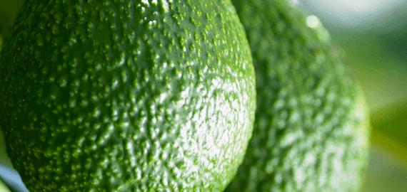 Southern Produce avocados